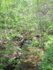 Dumbarton Oaks Park: Rock Creek