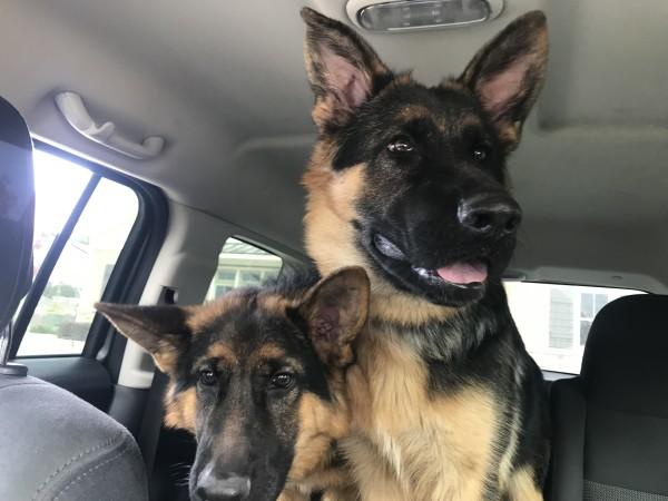 Max & Karma